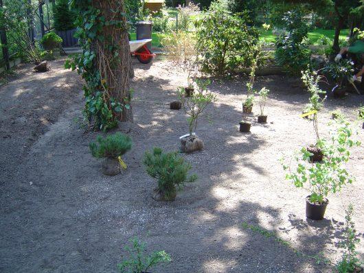 Gartengestaltung-Ausstellen von Pflanzen