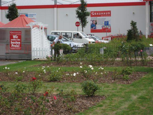Gartenpflege-Pflege von Pflanzflächen