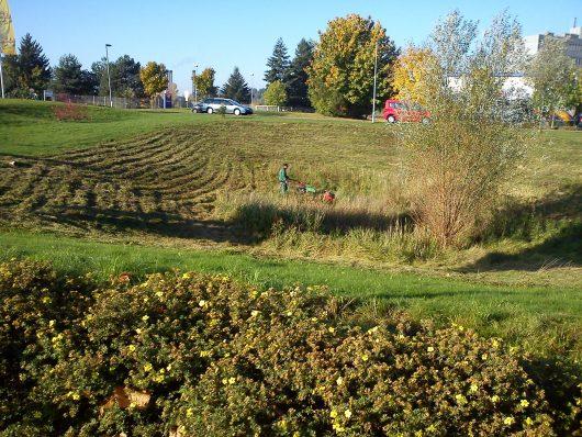 Gartenpflege-Schnitt von Wiesenflächen