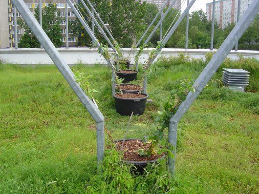 Gartengestaltung-Dachgarten