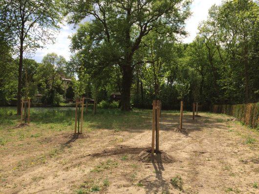 Gartengestaltung-Pflanzung von Bäumen