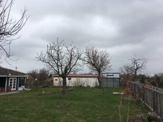Obstbaumschnitt-nach einem Jahr