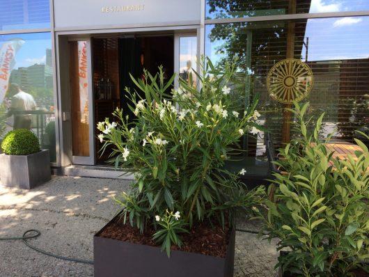 Gartengestaltung-Pflanzkübel gestalten