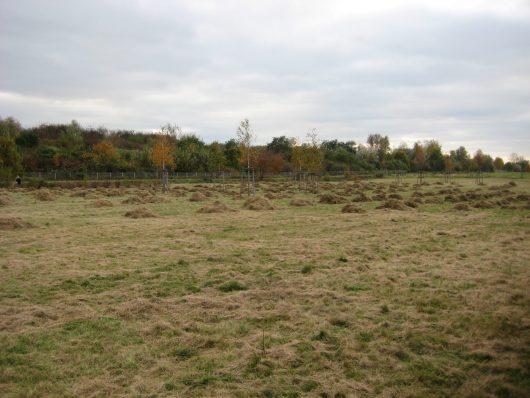 Gartenpflege-Wiesenfläche pflegen