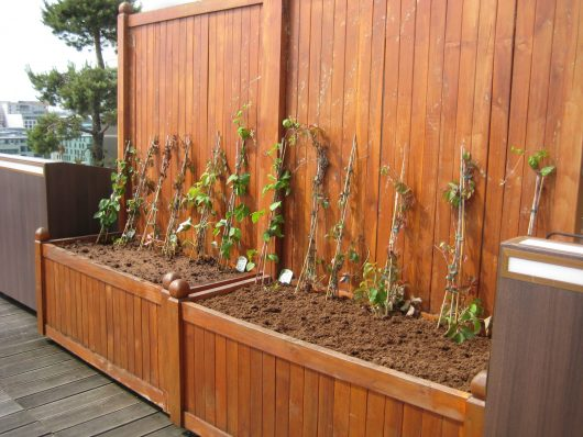 Gartengestaltung-Pflanzung von Kübeln