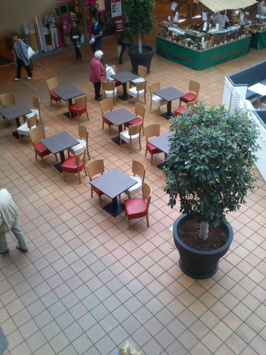 Zimmerpflanzen im Center